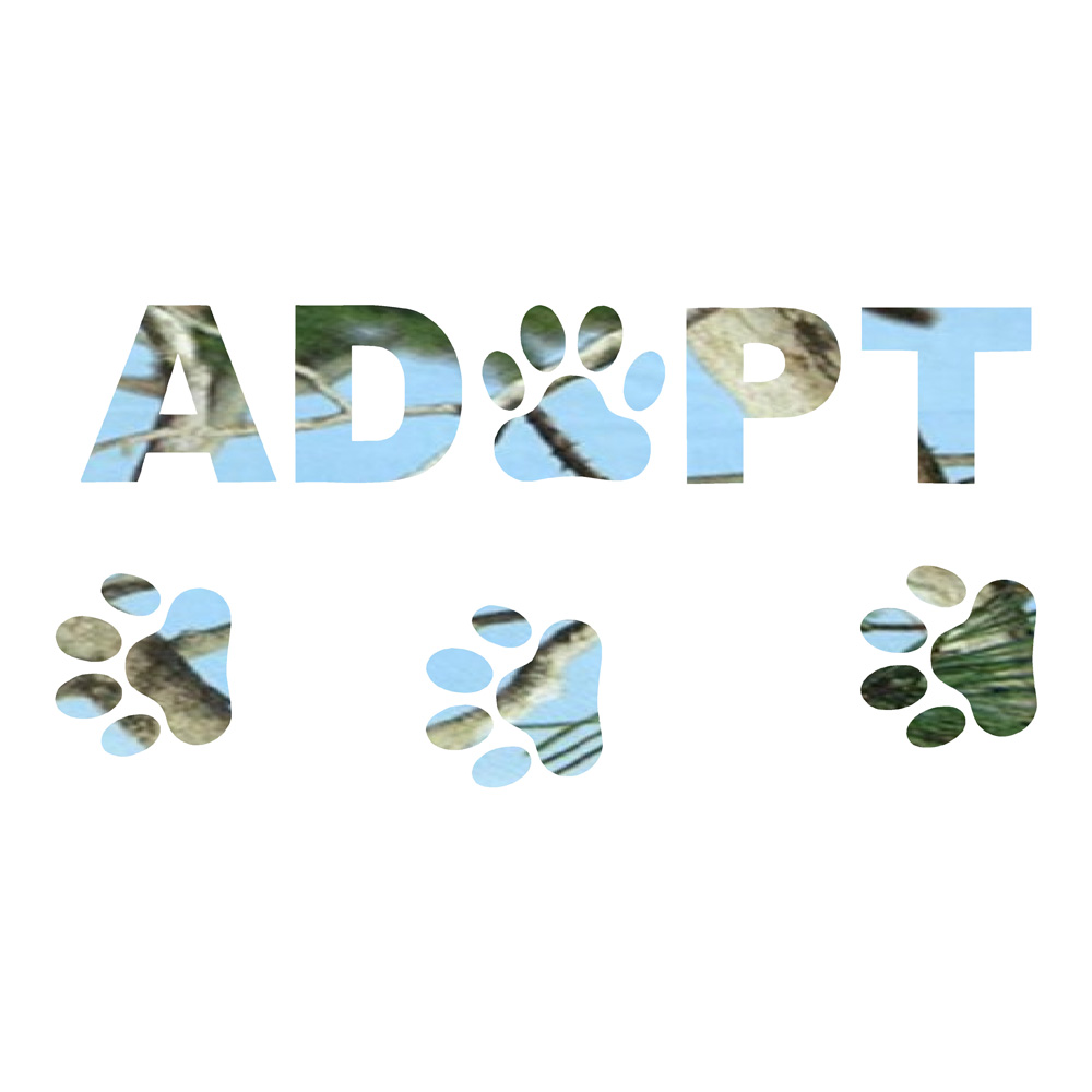 Adopt Blue Camo Rescue Animals Stickers Car Decal